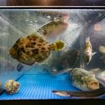 お店に入るとまず目を引くのが、活魚が元気に泳ぐ水槽。カウンター席は、そんな活魚が目の前で手際よくさばかれる姿が楽しめる特等席です。その日の気分に合わせて調理法を変えてもらうことも可能。