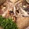 鯛と鰹の出汁がよく出ている、店の名物料理『町家の鯛めし』 3~4人前