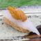 イカとウニが絶妙なハーモニー。塩とかぼすであっさりいただく『玄界灘産アオリイカと唐津産赤ウニ』