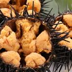 【夏季限定】ウニ本来の旨味を存分に味わえる『積丹の生ウニ』