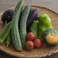 店の主役となるこだわりの野菜は、「風の色」という農家を中心に、地元の直売所や市場から仕入れ。出来る限り地元の柏で栽培され、無農薬、自然農法で育てられた野菜を使用しています。