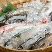 石巻直送の魚介を中心に、地元の新鮮な食材をふんだんに使用
