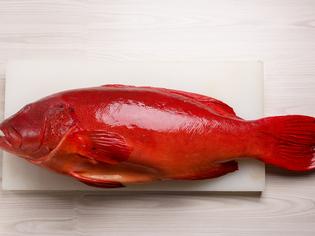 熟成を経て多彩な料理に仕立てられる高級魚「スジアラ」