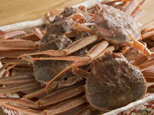冬の主役である「蟹」は、その日最良のものだけをチョイス