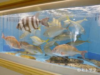 八潮(和食、熊本県)の画像