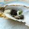 広田湾産生牡蠣に極上ベルギー産フレッシュキャビアと香草クリームをのせて