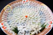 ふく料理といえば、見た目の美しさも魅力のひとつ。大皿を菊の花に見立てた『菊花盛り』は華やかさのなかに散りばめられてきた職人技がキラリと光る食の芸術です。