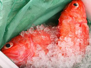 「キンキ」など、北海道の自然が育んだ食材をご用意