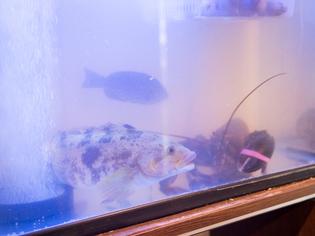 店内の水槽を元気に泳ぐ、活きが自慢の「活魚」