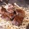 牛バラ肉焼き