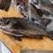 「その季節で一番美味しいものを」敦賀漁港直送の鮮魚がずらり