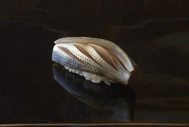 魚の個性が際立つ、光物の王様『小肌』