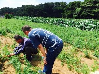 野菜が育つ様子を見て、生産者さまの想いを聞く