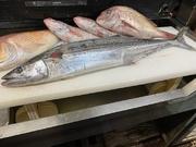 さわらは春の魚と思われがちですが。 秋から冬にも美味しく、むしろ脂ののりもよくベストシーズンです。 魚体  3kg~5kg以下の特大サイズ 漁法「定置網」 産地「宮城県 石巻」 参考価格 1kg/6000円~