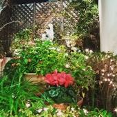 光の庭園 2018