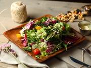 シンプルで王道。野菜本来の美味しさを楽しめる自慢のグリーンサラダ。