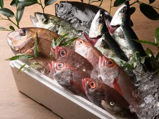 九州で水揚げされた鮮魚が中心。仕入れは、当日使う分のみ