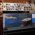 瀬戸内海で獲れた新鮮な魚介類、九州産黒毛和牛や黒豚