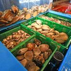 北海道・函館など全国各地から毎日直送される生きのいい魚介類