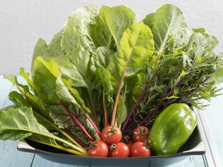 自家菜園で栽培したオーガニック野菜をたっぷりと
