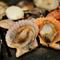 三重県の水産会社から直接仕入れる、新鮮な貝類