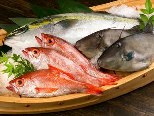 のどぐろ、ぶりなど、能登から直送で届く鮮魚