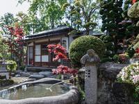 美しく厳かで格式高い日本庭園を眺めながら郷愁感に浸る