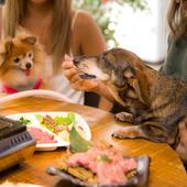 広々としたおしゃれな空間で、愛犬と一緒に食事が楽しめる
