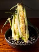 とうもろこしの中でも、最近話題の「味来とうもろこし」を使用した天ぷらです。「味来とうもろこし」がもつ本来の素材の良さを活かした店自慢の一品。見た目の迫力感と美味しさが楽しめます。