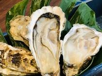 厚岸産  殻付き牡蠣