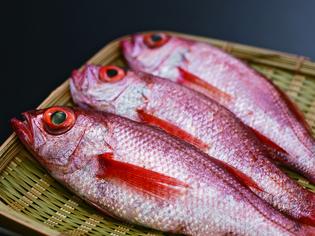 一本釣りで丁寧に釣り上げられた長崎県対馬産の赤むつ「紅瞳」