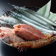 """""""元漁師""""である店主のこだわりで【灘や】では養殖魚を一切使わず、天然ものだけを仕入れています。漁場に恵まれた山口といえど天然ものだけで魚種を揃えるのは簡単ではありませんが、日々の仕入れで努力しています。"""