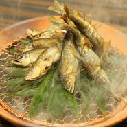 北海道ではあまり食べないという鮎や鱧も生きた状態で仕入れ、厨房内の水槽で泳がせてから活け締めに。京都の錦市場から取り寄せた特上ちりめんは、すっぽんのだしで炊き上げています。ご飯と共にどうぞ。