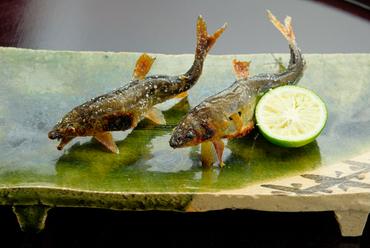 琵琶湖安曇川の新鮮な鮎を、いけすから水揚げ『活けあゆ塩焼き』 4月~11月頃のみ