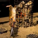 「炙り」「焼き」「刺身」で提供される鮮魚は全て、料理人が自ら市場に足を運んで見極め、仕入れます。その日一番の食材を、最高の状態に仕上げる。ゲストの笑顔を見るために、決して妥協することはありません。