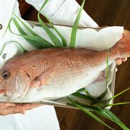 瀬戸内海に面する淡路島の近くには明石海峡、鳴門海峡があり、新鮮で身のしまりが良い上質な天然鯛が有名です。【青海波-海の舎-】では、地元の漁港で水揚げされた新鮮な真鯛が使用されています。