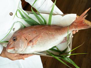 明石海峡、鳴門海峡で育った上質な「淡路鯛」