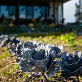 無農薬・無肥料の自然栽培で育てる、元気でおいしい季節の野菜
