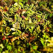 花山椒・実山椒穴子重フェアなど、旬の食材を取り入れてます!